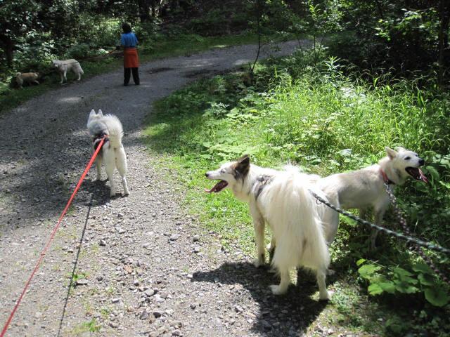 Saskia retrouve ses copains de traîneau 810