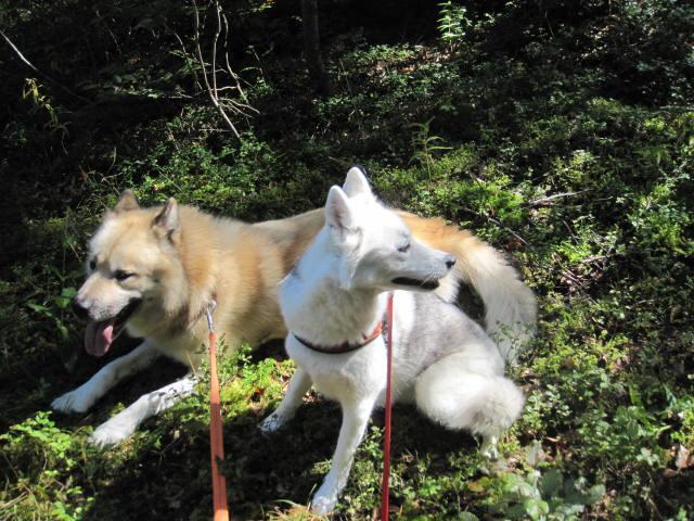 Saskia retrouve ses copains de traîneau Kiwok_14