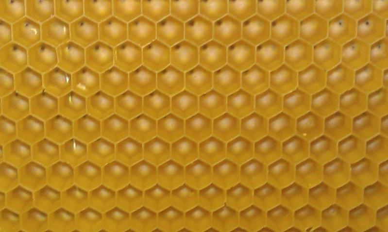Avantages et inconvénients des ruches Warré. Imag1114