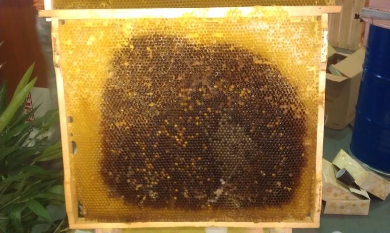 Avantages et inconvénients des ruches Warré. Imag1117