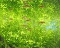Мои аквариумы. 210