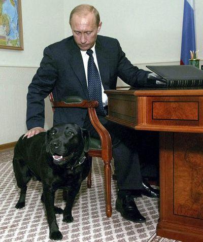 Знаменитости и собаки (фото). 35450710