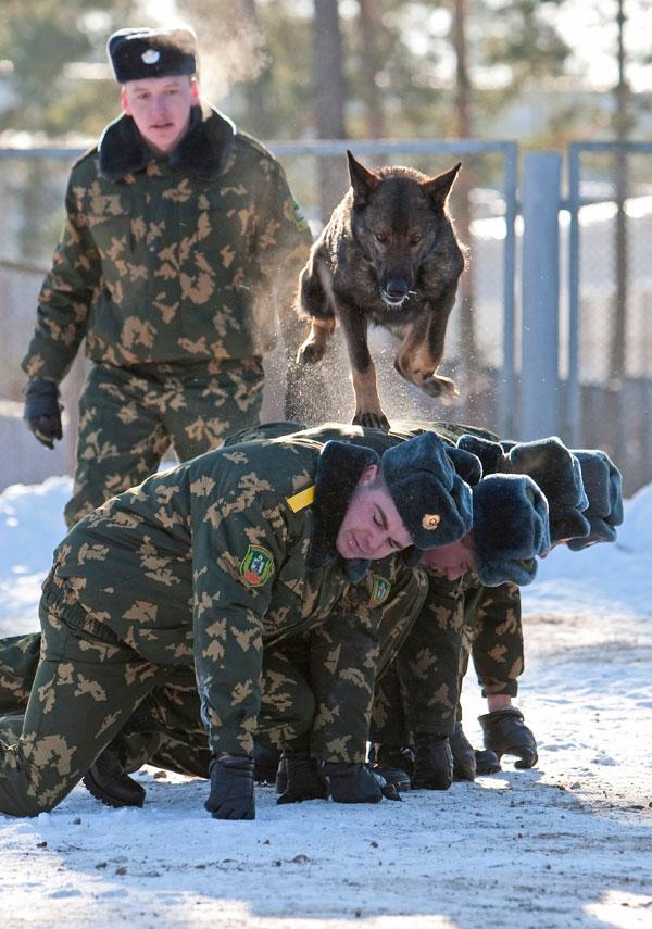 Собаки на службе (фото) 7e5c2910