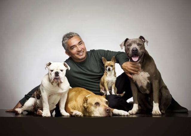 Знаменитости и собаки (фото). 936ful10