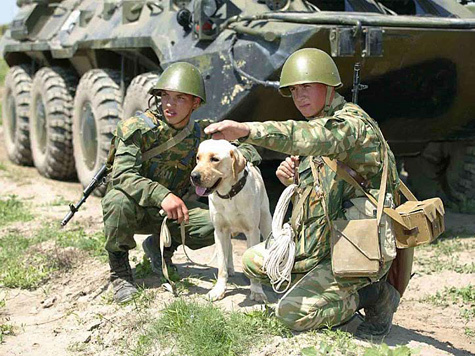 Собаки на службе (фото) Detail10