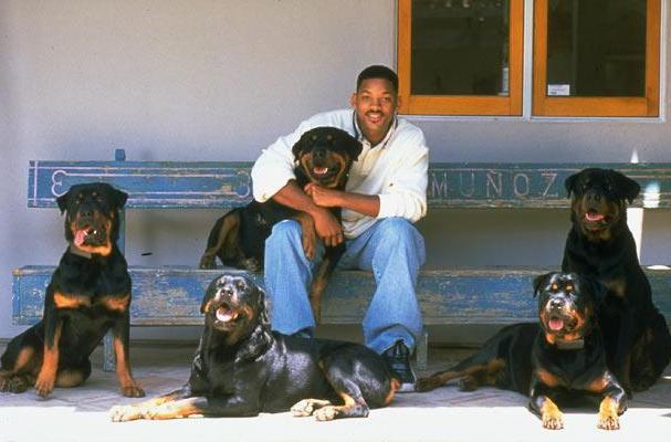 Знаменитости и собаки (фото). File_10