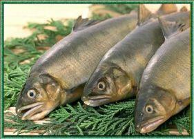 Спорная тема: от рыбы польза или вред? 9506010