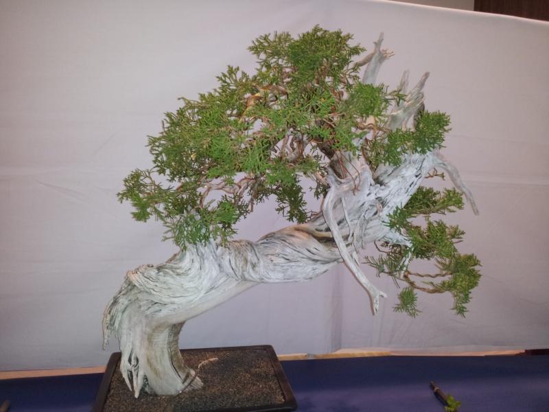 Bonsai Show in San jose ( Betsuin's club ) 2012-011