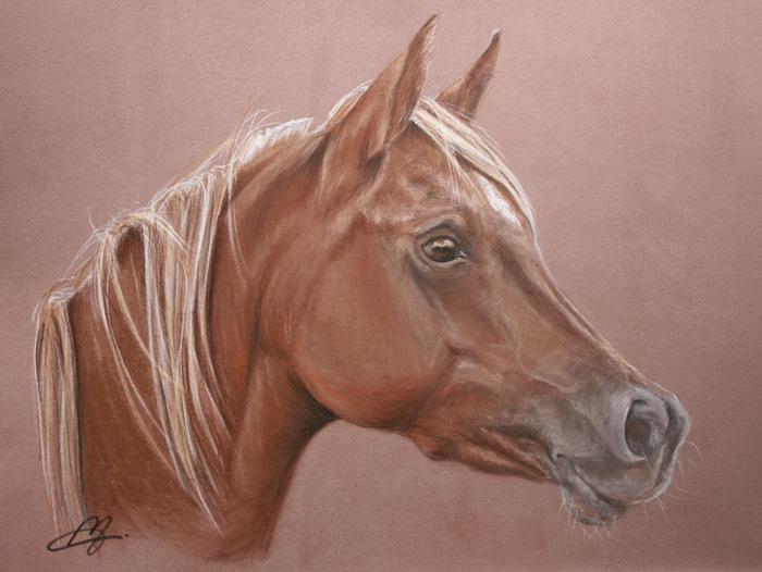 Un dessin de votre cheval 00611