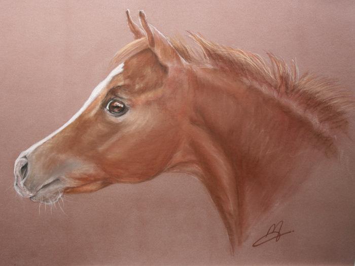 Un dessin de votre cheval 00810
