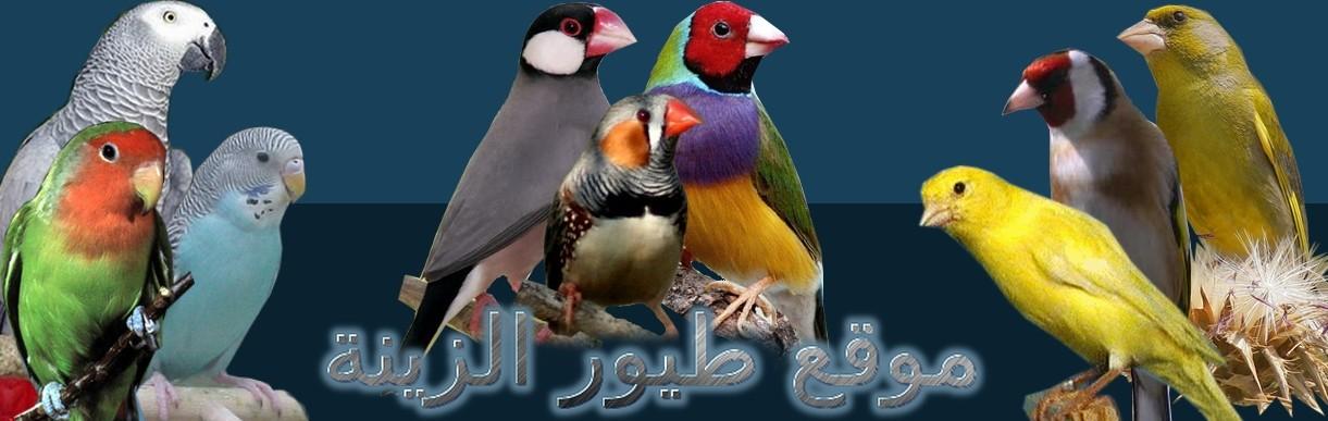 موقع طيور الزينة