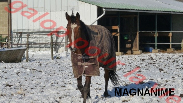 MAGNANIME - SF né en 2000 - Placé hors association Magnan10