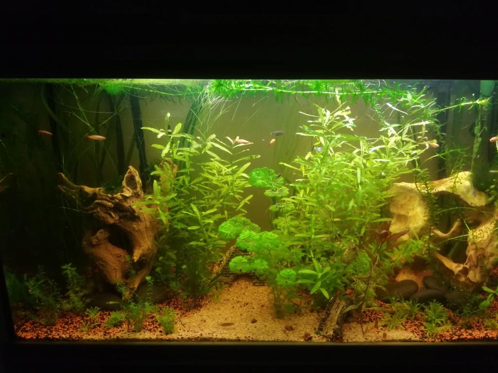 aquarium 200l  besoin de conseils - Page 3 Img_2021