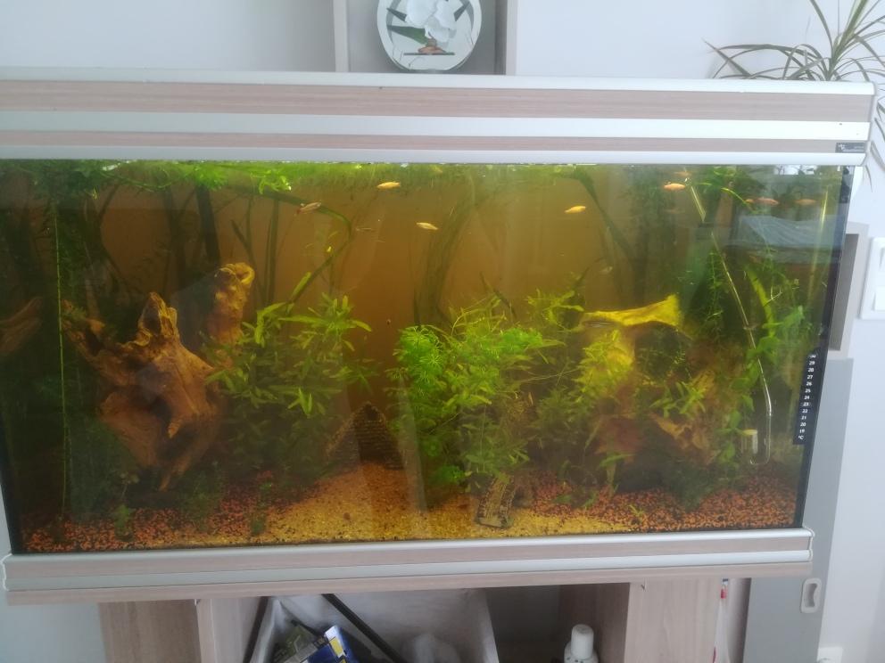 aquarium 200l  besoin de conseils - Page 3 Img_2024