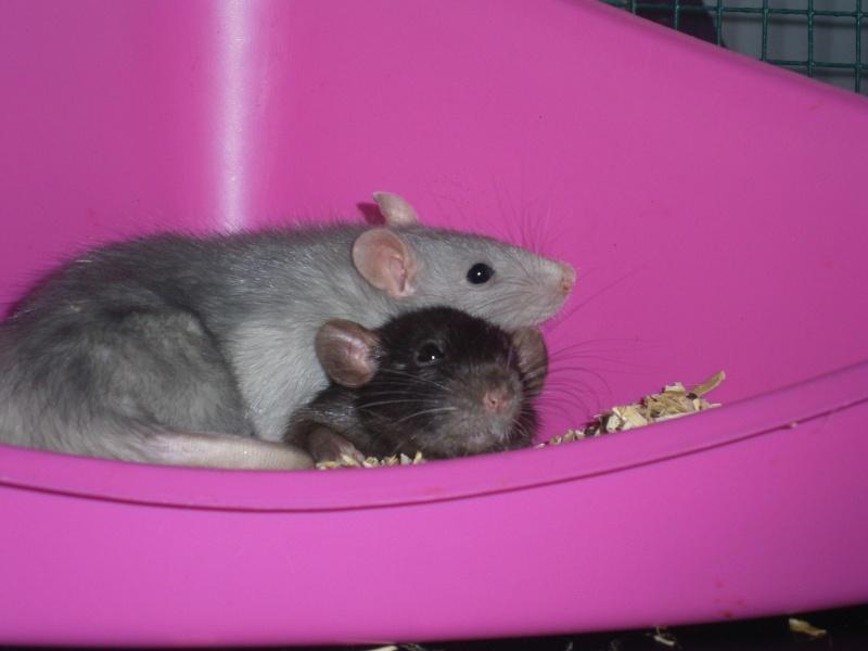 Mes ratouyounes ! P7130010