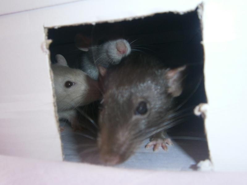 Mes ratouyounes ! P7140010