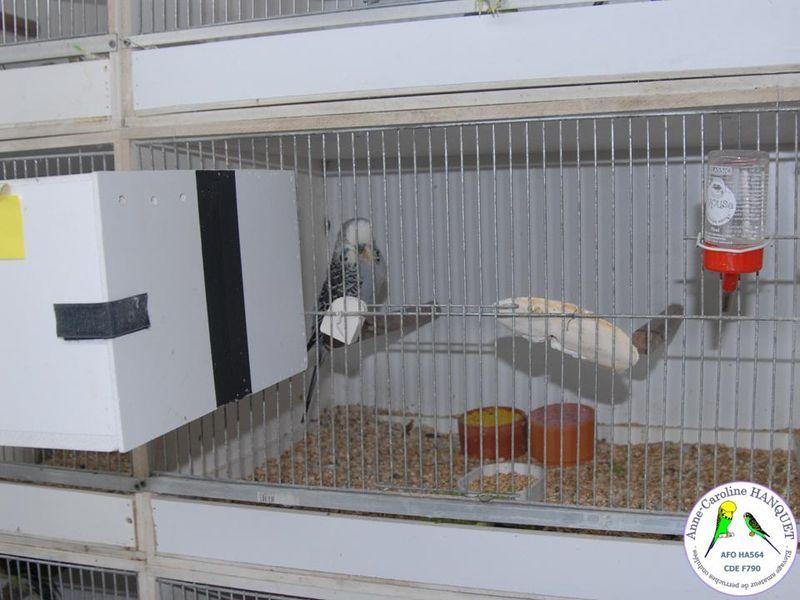 Box d'élevage perruche ondulée 39275510