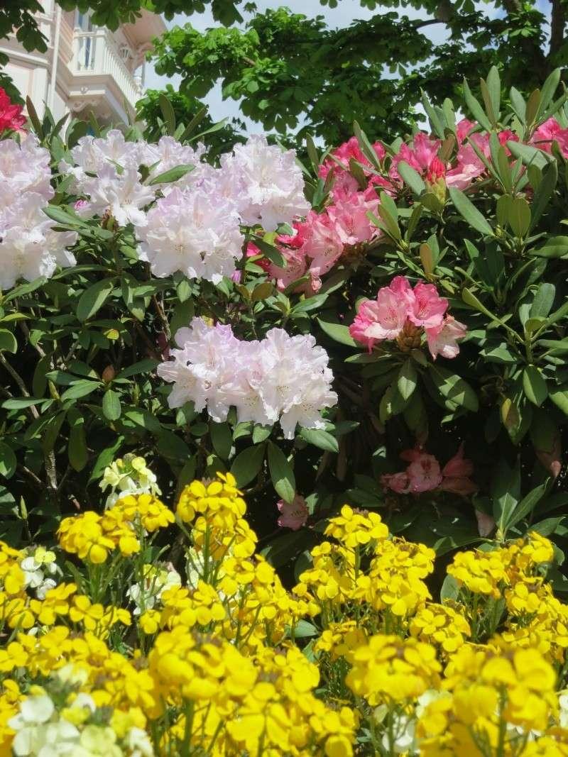 Les Jardins, Les Fleurs et l'Eau au DLP Img_0084