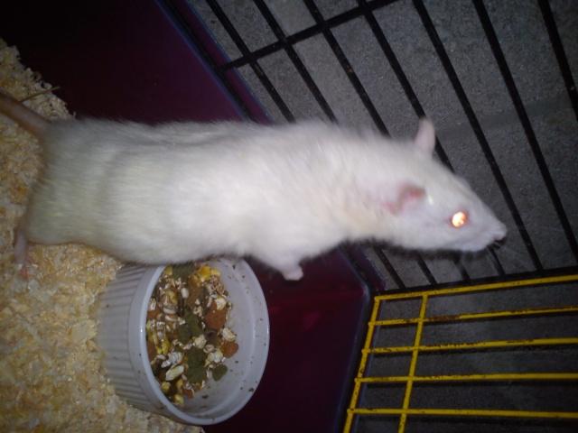 Mes rats ^^  Dsc00822