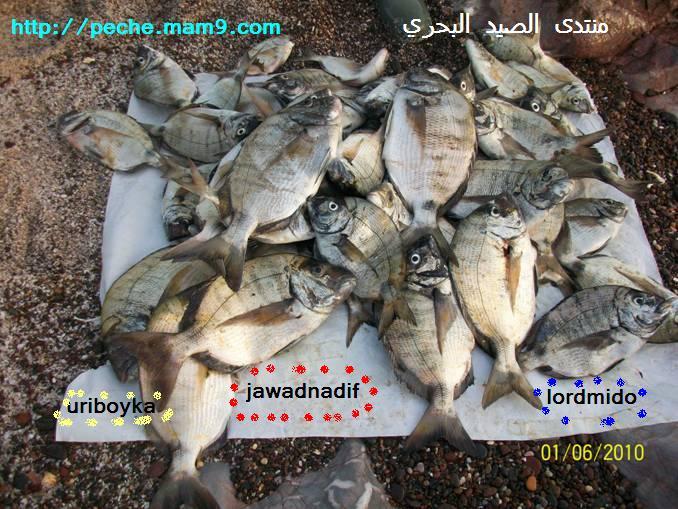 منتدى الصيد البحري
