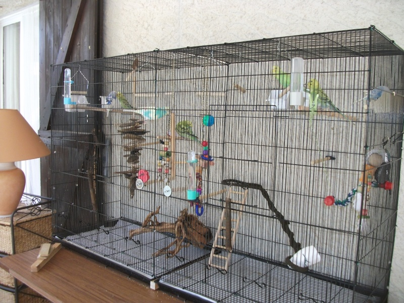 Modèle de cage Dscf5114