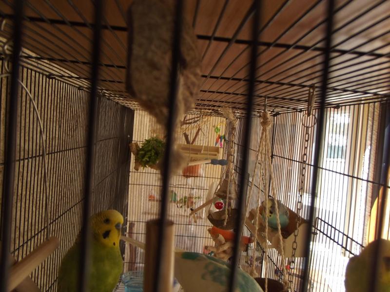 La famille s'agrandit : cages XL et volières d'intérieur Dscf8910