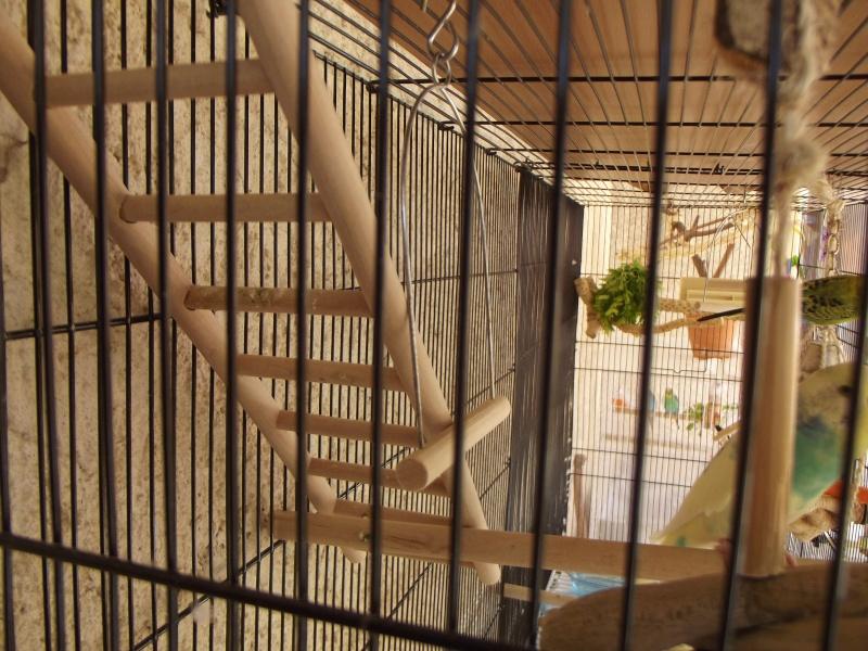 La famille s'agrandit : cages XL et volières d'intérieur Dscf8911