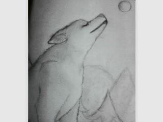 tuto : comment dessiner un loup ? (2) - Page 3 Loup10