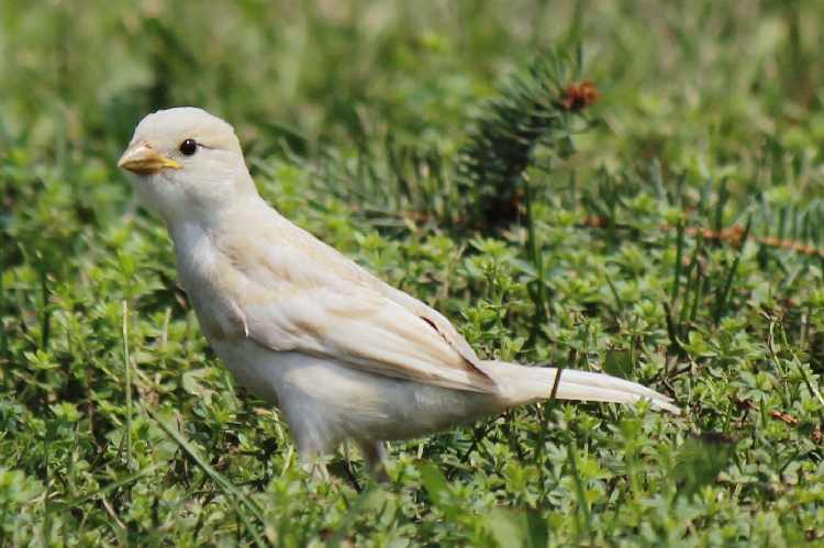 Oiseau blanc?? _mg_5711