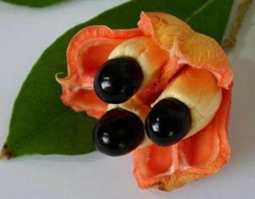Las 10 Frutas más Exóticas y Raras del Mundo Fruta-13
