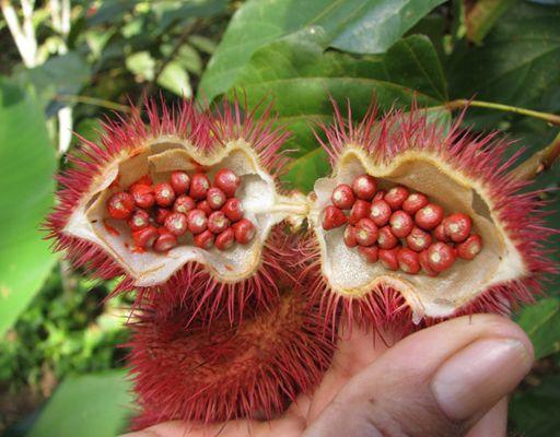Las 10 Frutas más Exóticas y Raras del Mundo Fruta-16