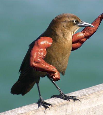 Arm-Birds! Armbir14