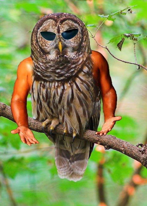 Arm-Birds! Armbir32