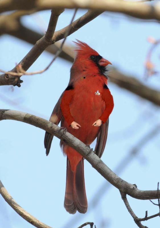 Arm-Birds! Armbir40