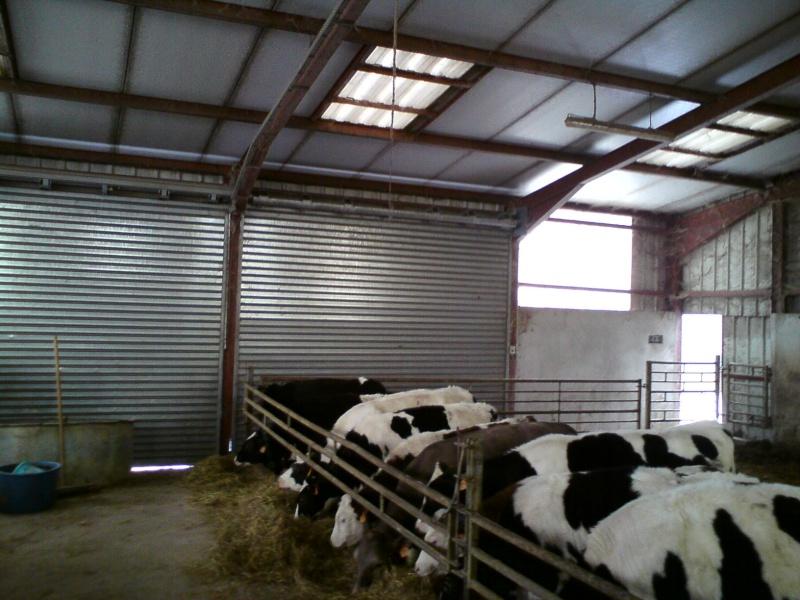 bâtiment des veaux d'élevages Dsc02410