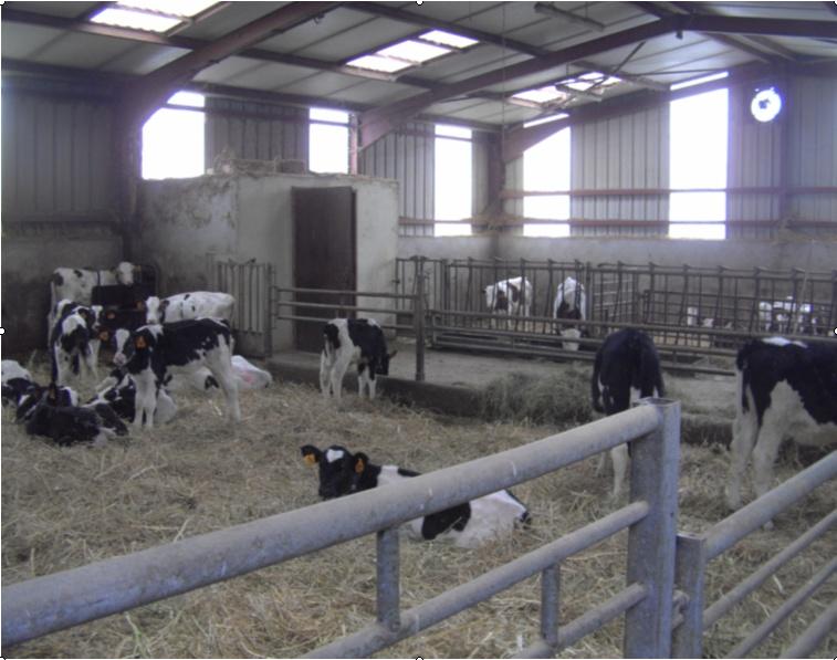 bâtiment des veaux d'élevages Sans_t10