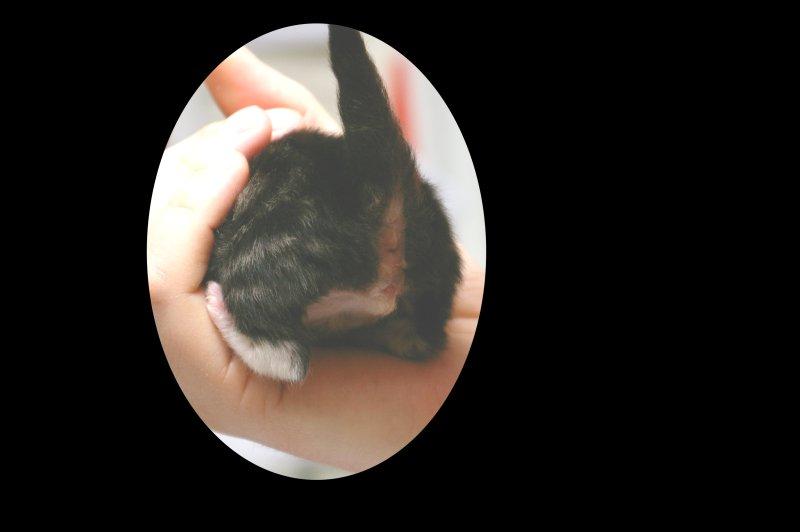 Sexe du chaton : mâle ou femelle - Page 5 0218-210