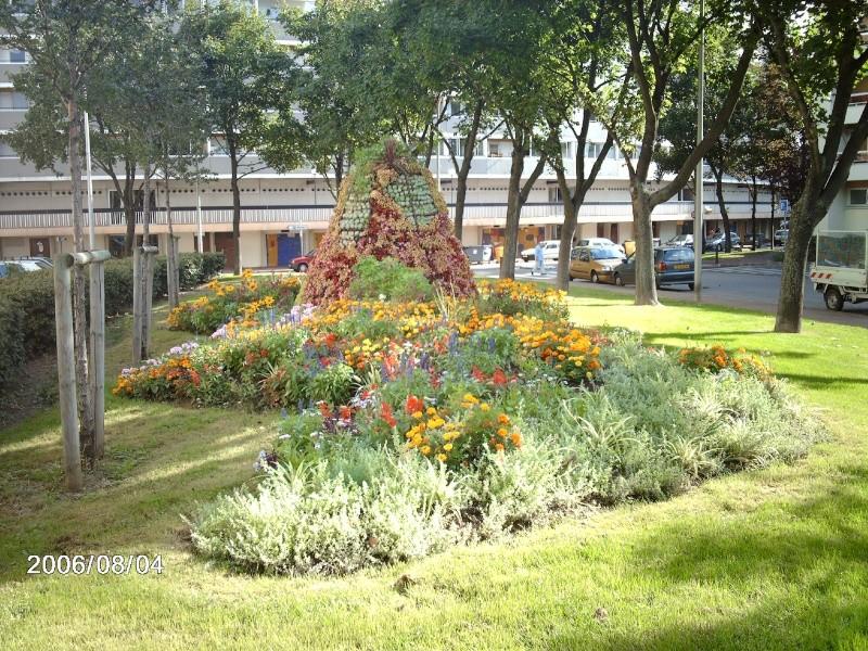 Crassula ' Gollum ' bien fleurie Imag0110