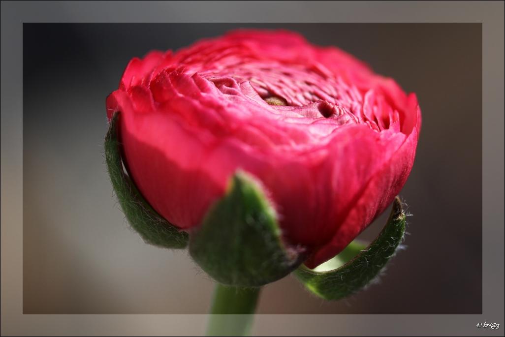 Vos bouquets de fleurs Img_7113