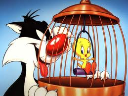 What Is Tweety Bird? Images14