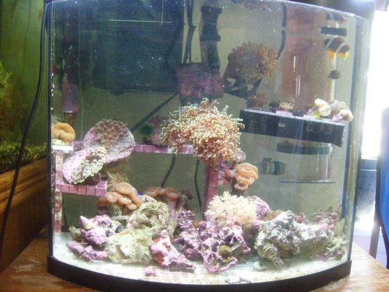 My 16 gal saltwater tank July-110