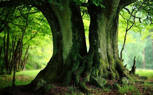 Tout ce qui est vivant est animé par la matrice de l'être: l'âme des arbres 14901910