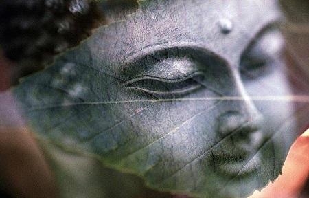 La sylvothérapie : améliorer son bien-être en connection avec un arb Buddha10