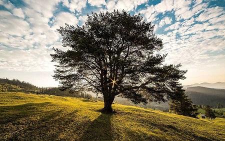 La sylvothérapie : améliorer son bien-être en connection avec un arb Tree-310