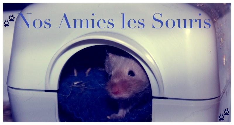 Nos Amies les Souris Logo10