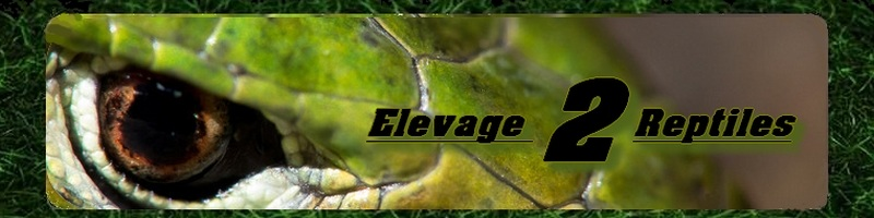 Elevage-2-Reptiles