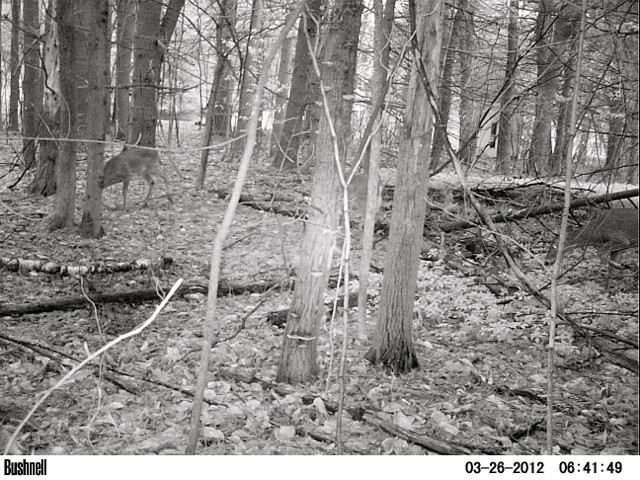 TRAIL CAM FOR PUBLIC LAND Pict0011