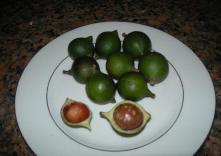 Présentation de mes fruitiers Noix_d10