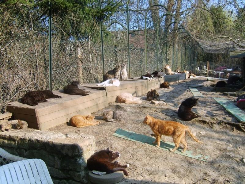Nouveau-chats-eclopes 46190711