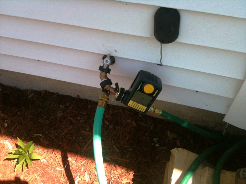 Placed my soaker hose today 00210